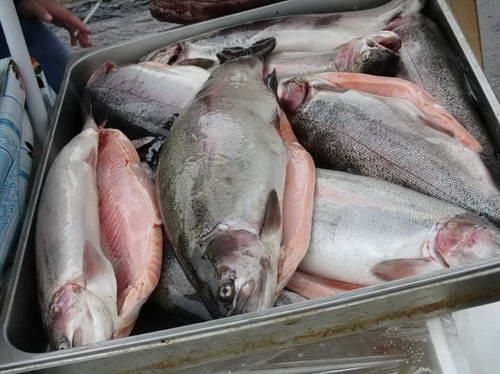 Валдай Сайт города Валдай Труд тяжёлый очень нужный Постоянный участник ярмарки Рыбный цех Новгородский Тут покупателя продавец обольщал копчёной рыбкой Красивая цена украшала очень красивую рыбу